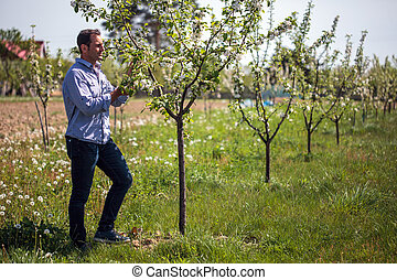 Farmer in the orchard