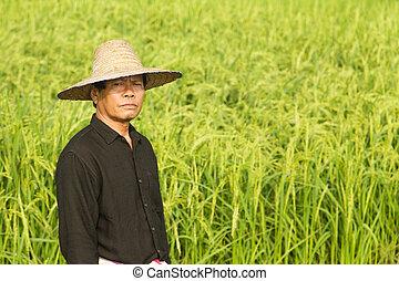 Farmer in the rice field