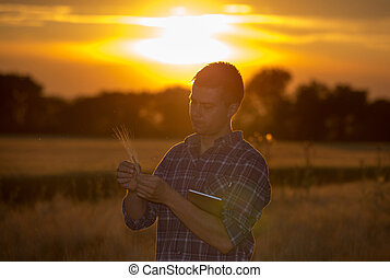 Farmer in wheat field at sunset in summer