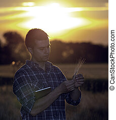 Farmer in wheat field at sunset in summer
