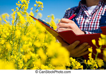farmer inspect canola field - farmer inspect quality of ...
