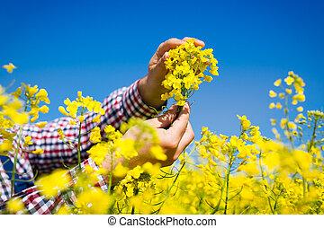 farmer inspect canola field - farmer inspect quality of...