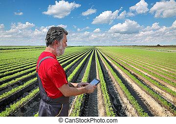 Farmer inspect carrot field - Farmer or agronomist examine...
