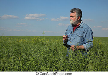 Farmer inspecting rapeseed crop in field using tablet