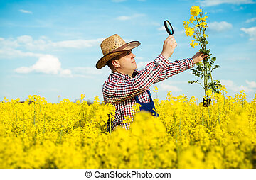 Farmer Inspecting rapeseed