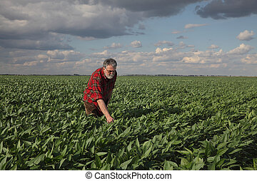 Farmer inspecting soy bean crop in field
