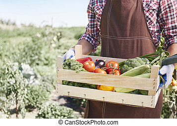 Farmer is carrying crate full of vegetables