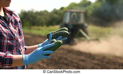 Farmer is holding a cucumbers on the background of working tractor in the field.