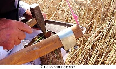 Farmer is preparing for harvest wit - Farmer will reap wheat...