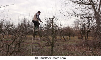 Farmer is pruning branches of fruit trees in orchard using...