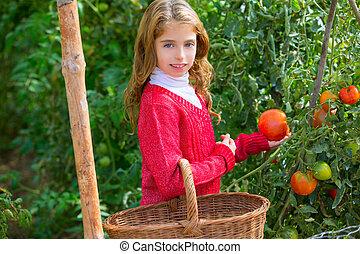 Farmer kid girl harvesting tomatoes