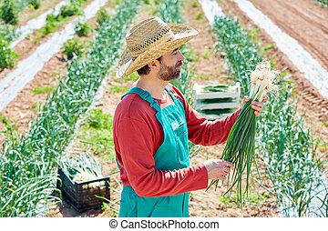 Farmer man harvesting onions in Mediterranean
