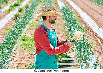 Farmer man harvesting onions in Mediterranean