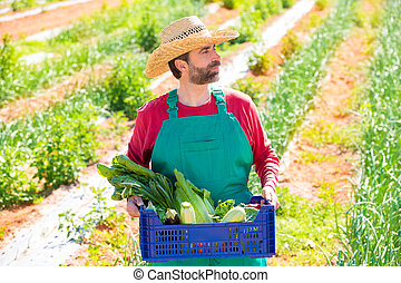 Farmer man harvesting vegetables in orchard