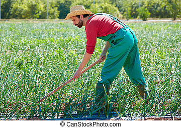 Farmer man working in onion orchard with hoe