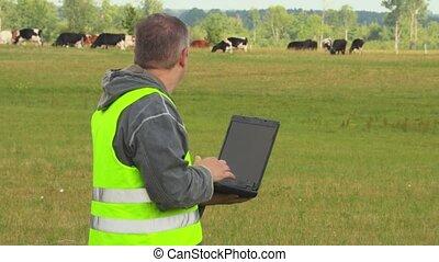 farmer, met, draagbare computer, dichtbij, koien, op, weide