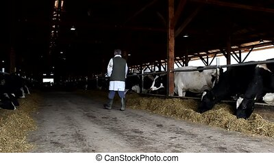 farmer, met, hongerige , koien, in, de, steek