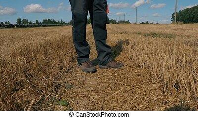 farmer, met, tablet, op, akker, in, zomer