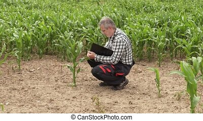 Farmer near bad growing corn