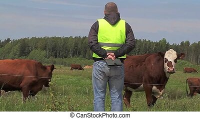 Farmer near cows at pasture
