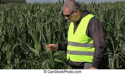 Farmer on the corn field
