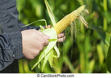 Farmer on the corn field