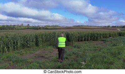 Farmer on the cornfield