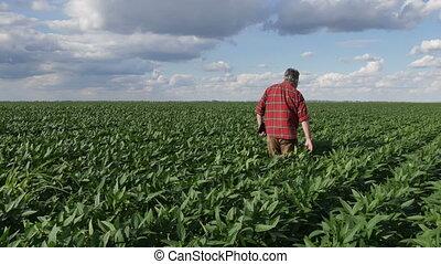 Farmer or agronomist in green soybean field