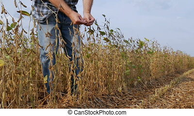 Farmer or agronomist in soy bean field - Farmer or...