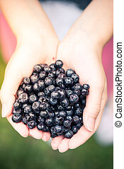 Farmer or gardener woman holding blueberries in hands