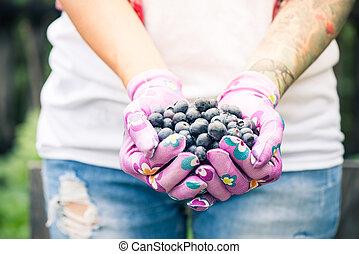 Farmer or gardener woman holding blueberries in hands