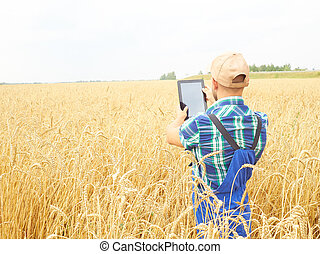 Farmer photographing wheat plant in field, using at tablet. Wheat harvest.