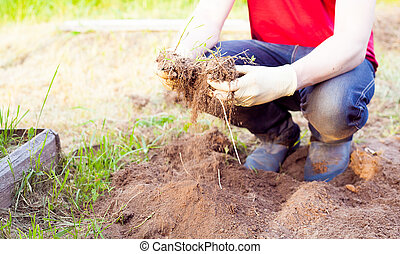 Farmer planting harvesting organic vegetables in the urban farm garden