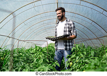 Farmer planting young seedlings in a greenhouse