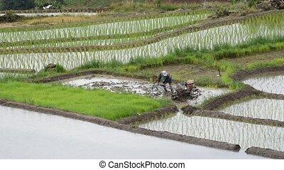 Farmer plowing the fields
