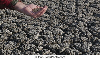Farmer pouring soybean to dry cracked land - Human hand...