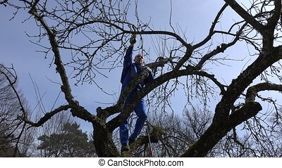 Farmer pruning fruit tree twigs in orchard on blue sky background.