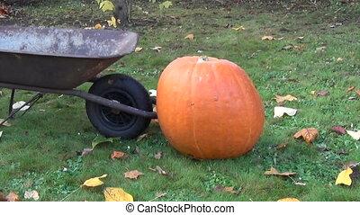 farmer pumpkin barrow