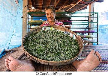 Farmer showing silkworm