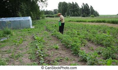 farmer spray plant