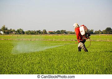 farmer spraying pesticide in the rice field