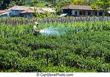 Farmer spraying pesticide on his field
