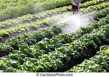 farmer spraying vegetables