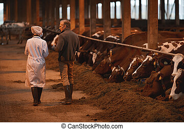 Farmer Talking to Veterinarian at Farm