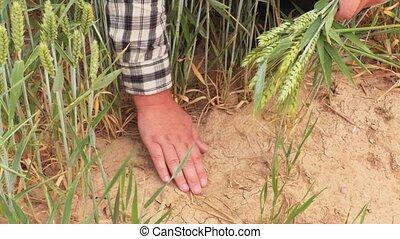 Farmer touch dry soil