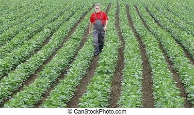 Farmer walking in soybean field