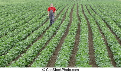 Farmer walking in soybean field