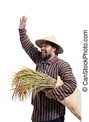 farmer wave his hand and hold rice plant