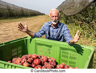 Farmer with crate full of apples in modern orchard
