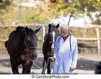 Farmer with horses on ranch